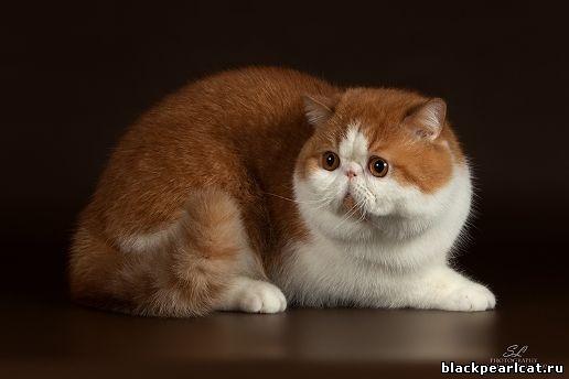 Ferrile cat